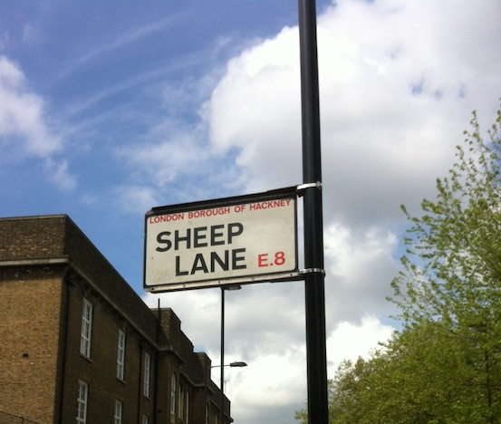 sheeplane